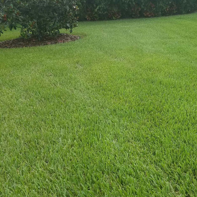 A freshly cut-to-perfection green lawn in Parrish, Fl.