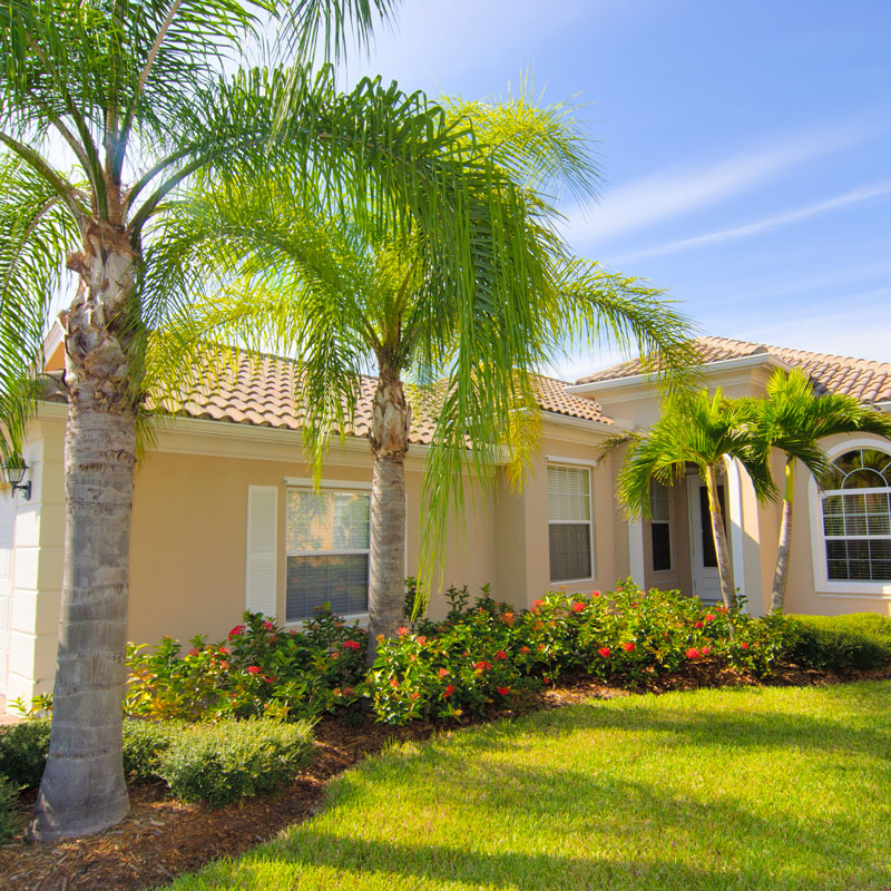 Perfectly maintained palm trees in Parrish, FL.