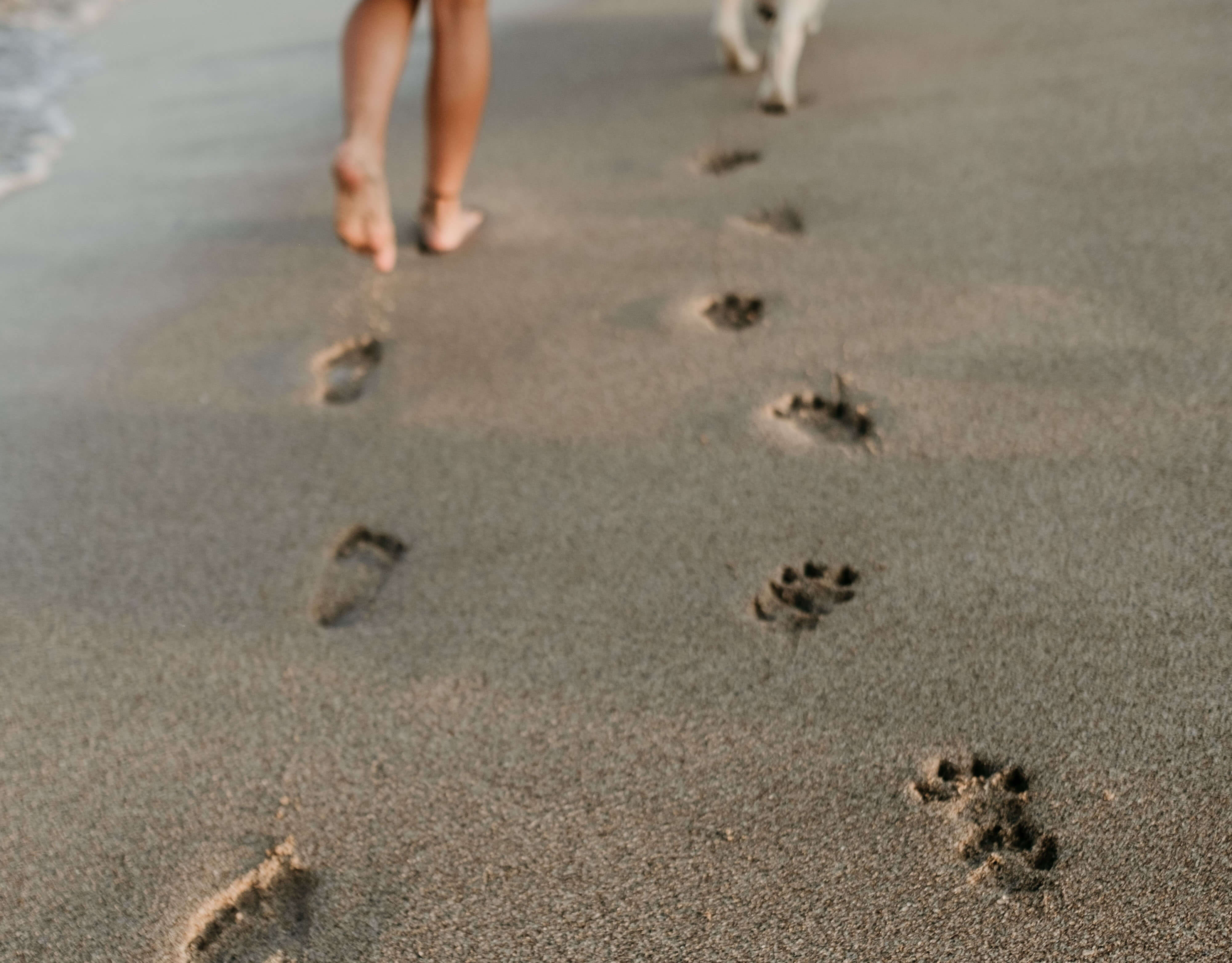 What is Digital Footprint