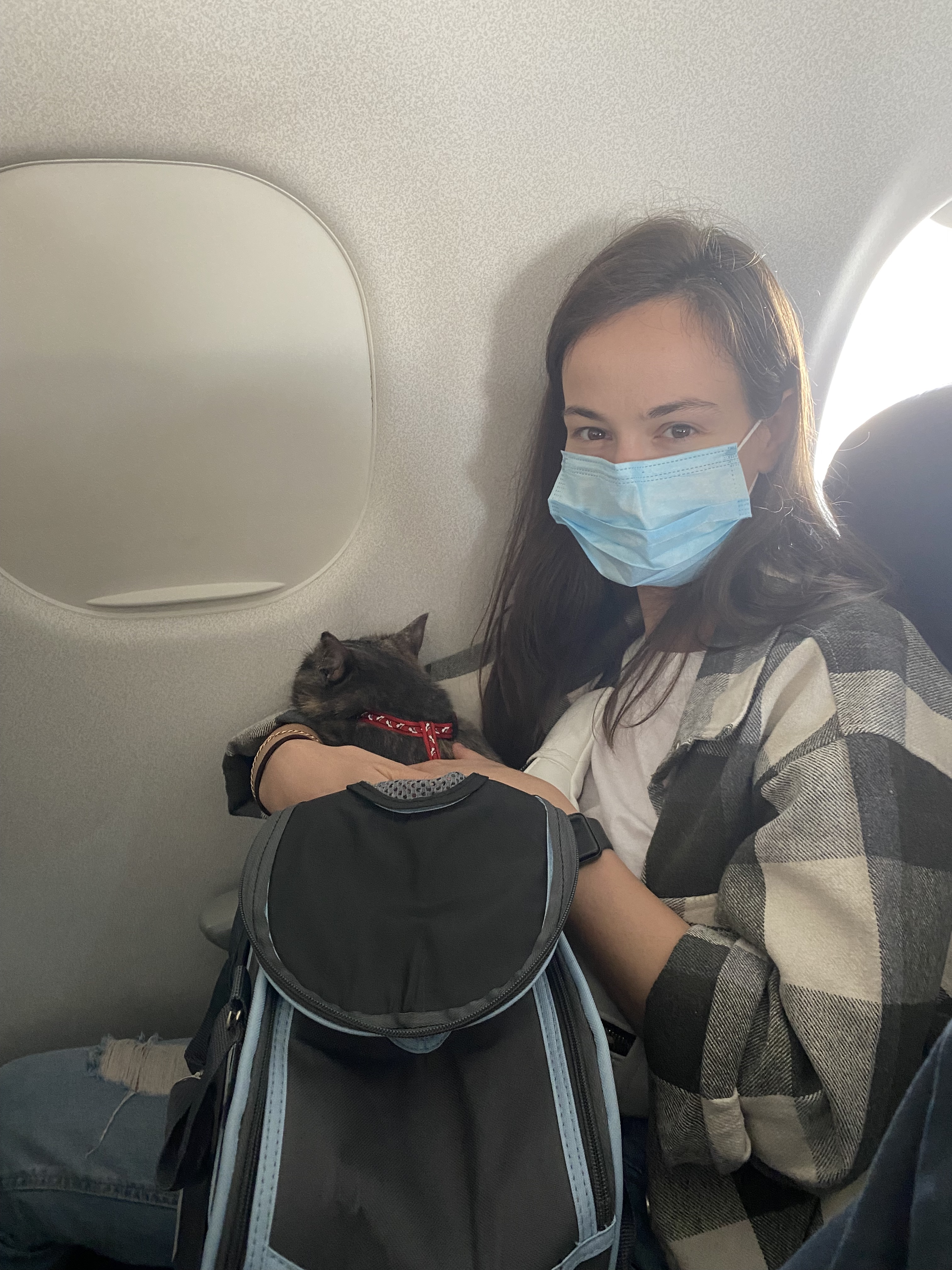 Expat moving to Amsterdam for a tech job with her cat