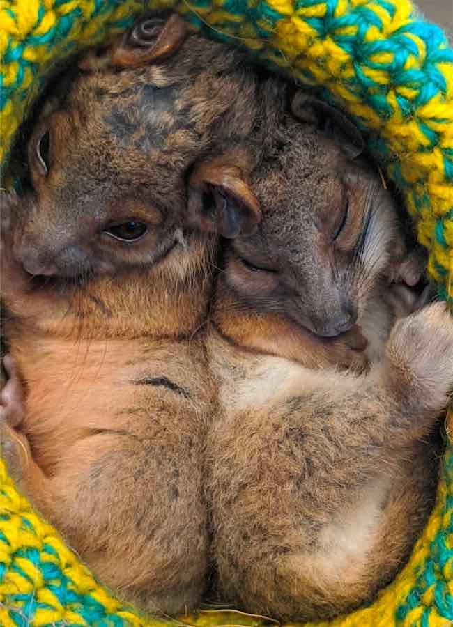 animals curled up
