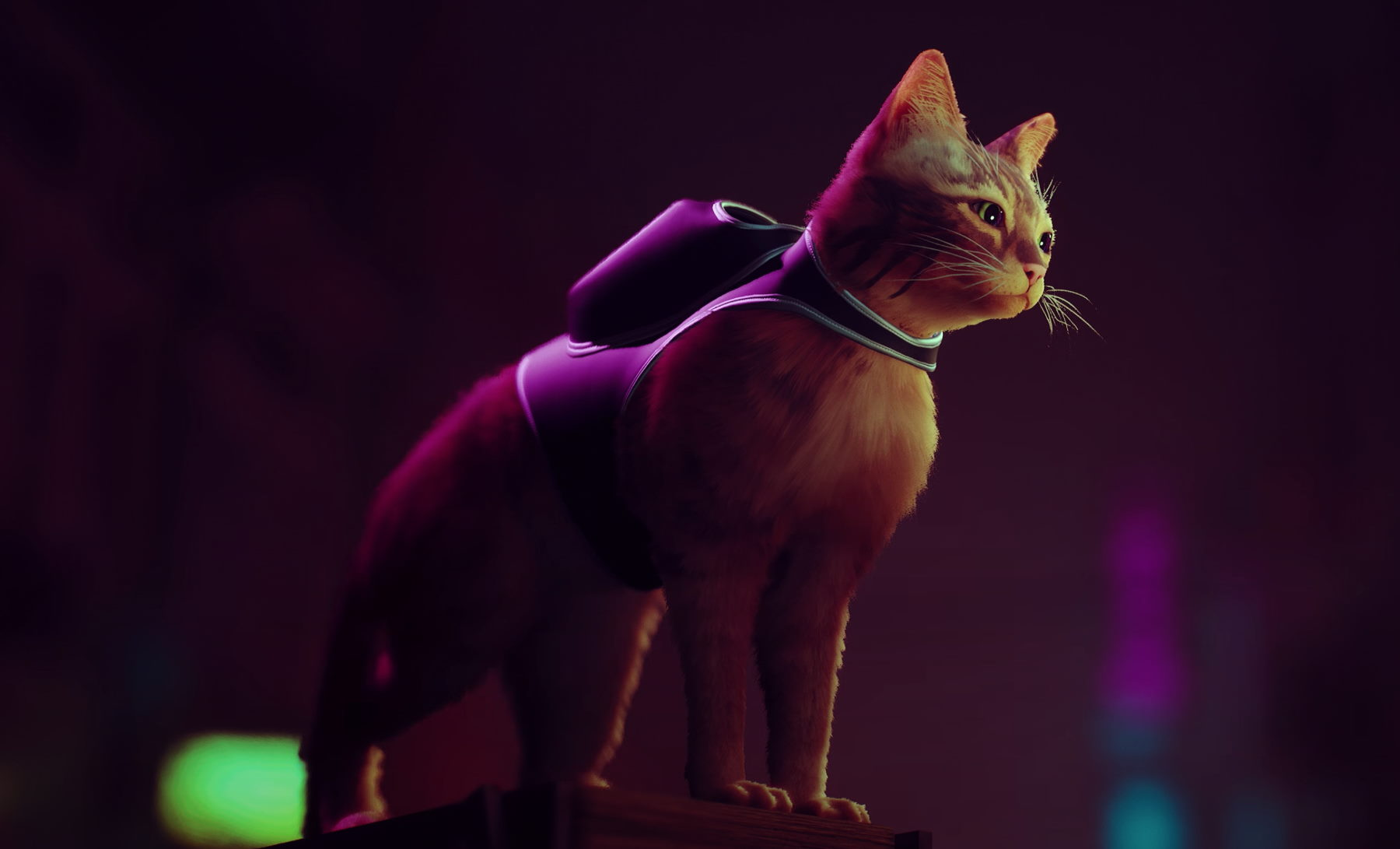Screenshot of cat from Stray in PS5|Kowloon walled city in hong kong|