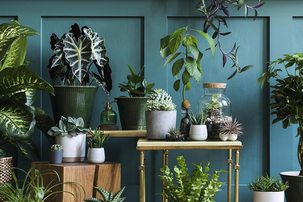 Fougere Plants