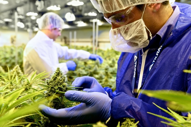 What Do Cannabis Companies Need to Know about GMP?