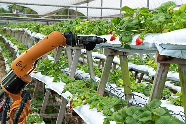Robotic food farms