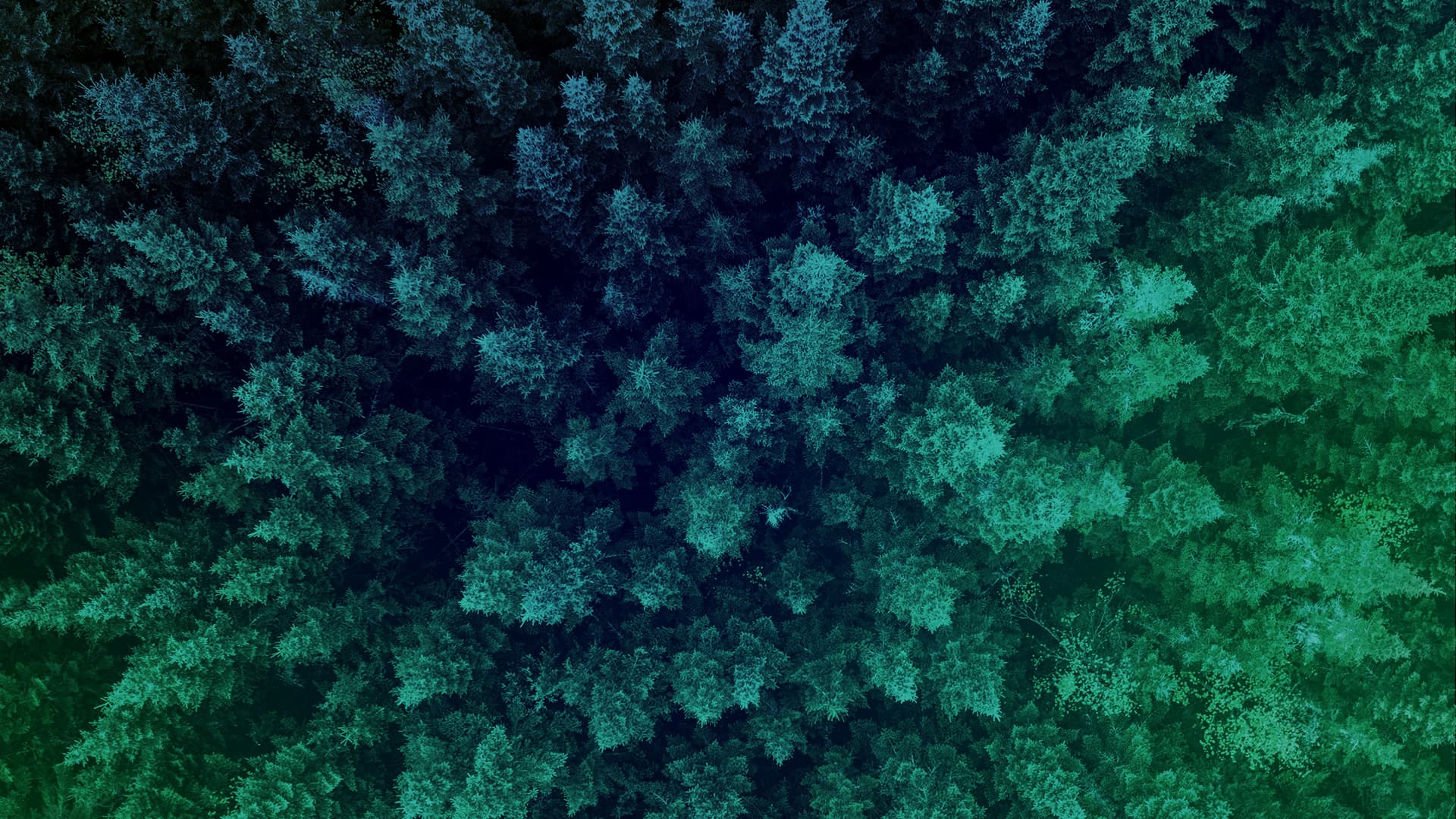 A forest of trees, seen from above.