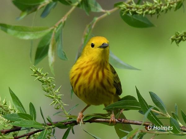 2022_06-03 Little River Breeding Bird Count