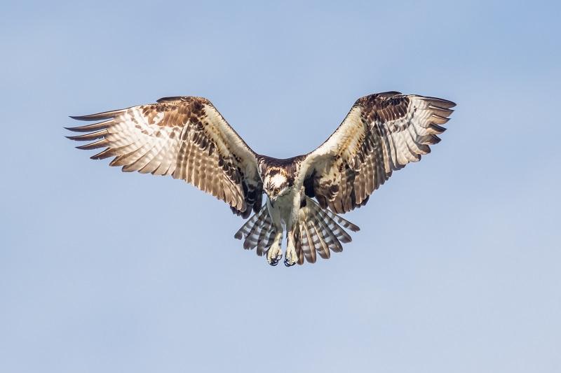 Osprey, Ft Desoto FL