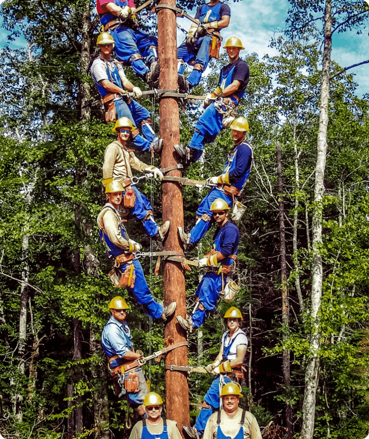 Group of builders climbing on a tree