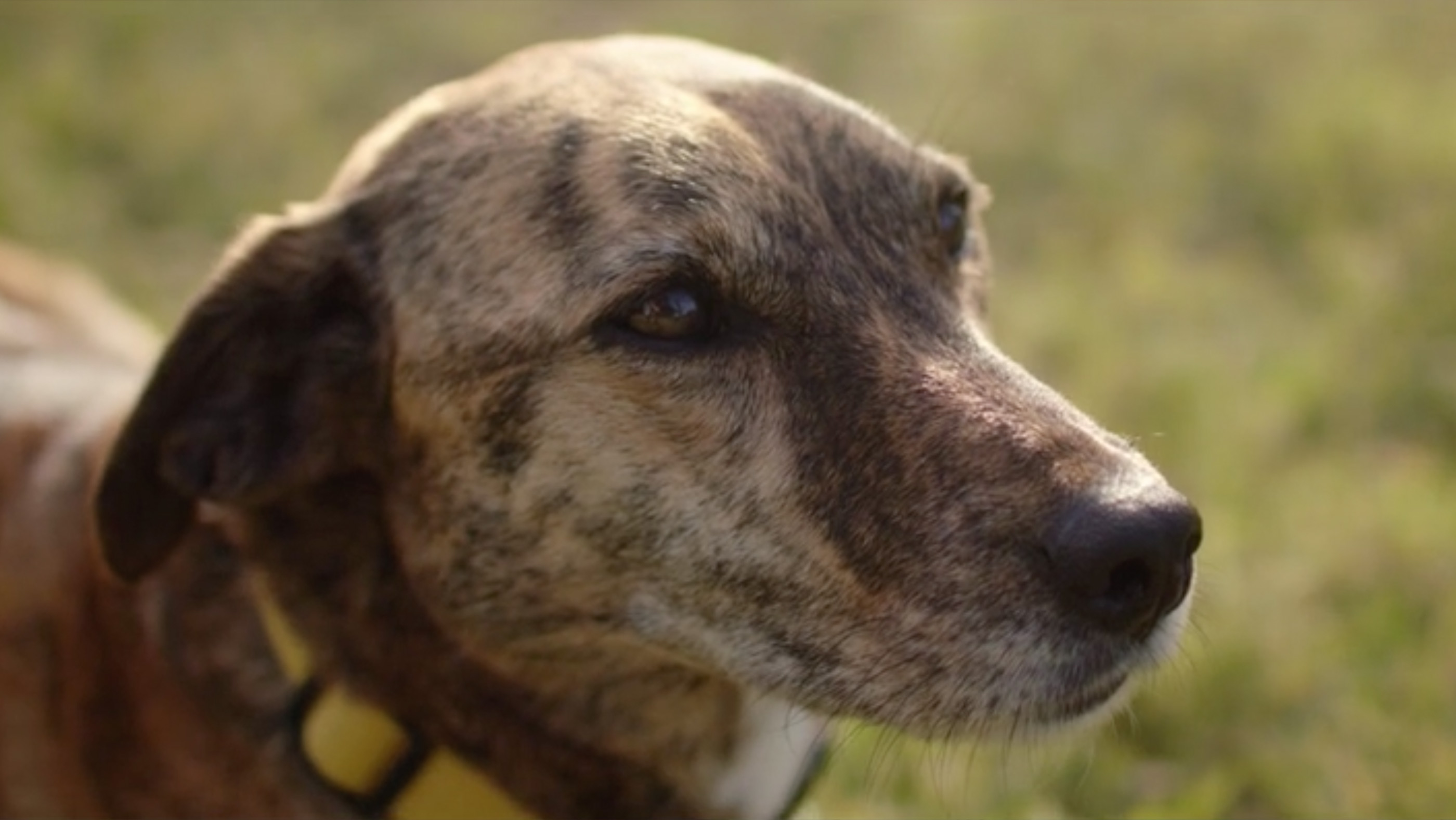 Black Hawk Hero image of dog