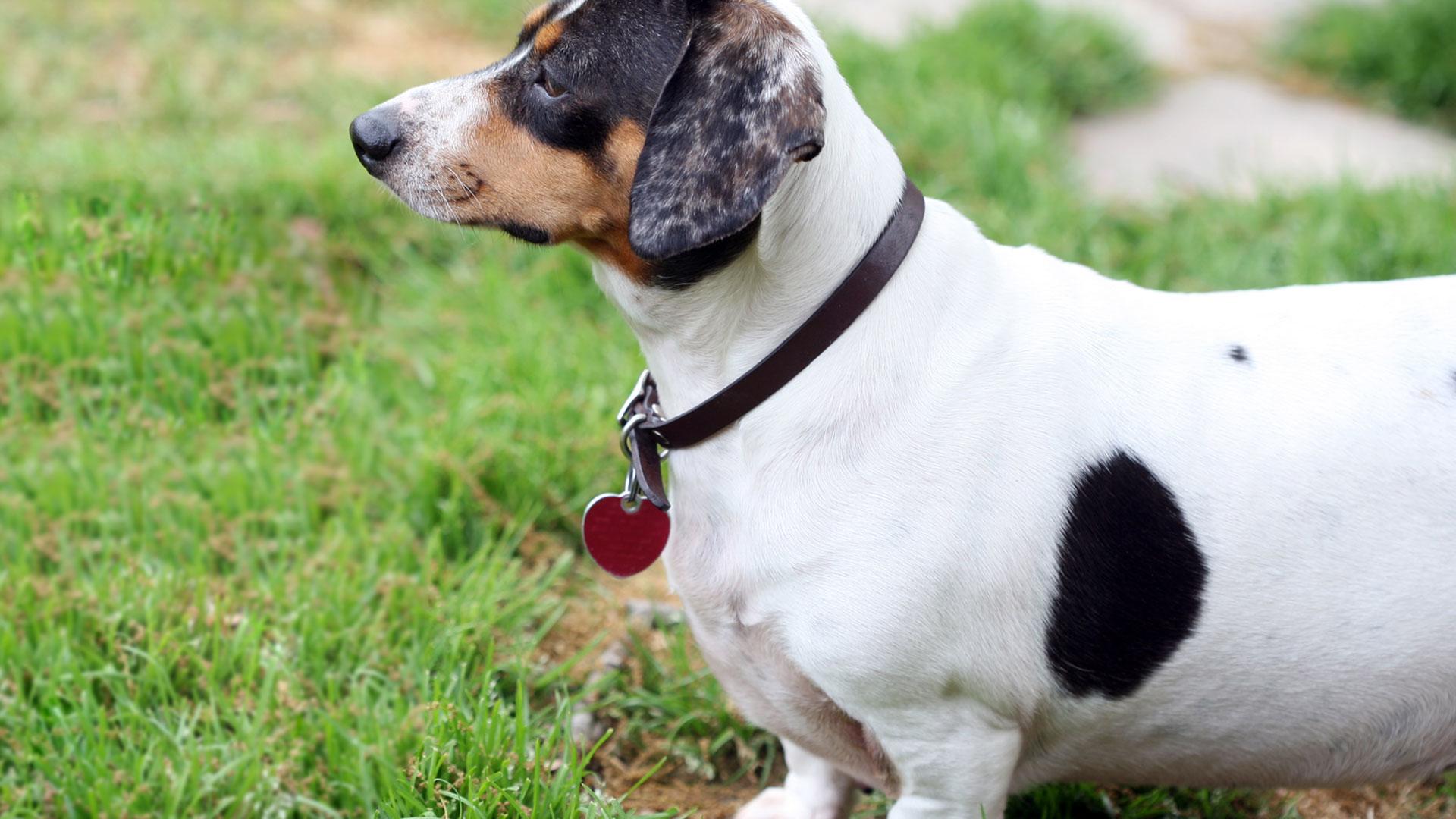Dogcheck Hero image of dog