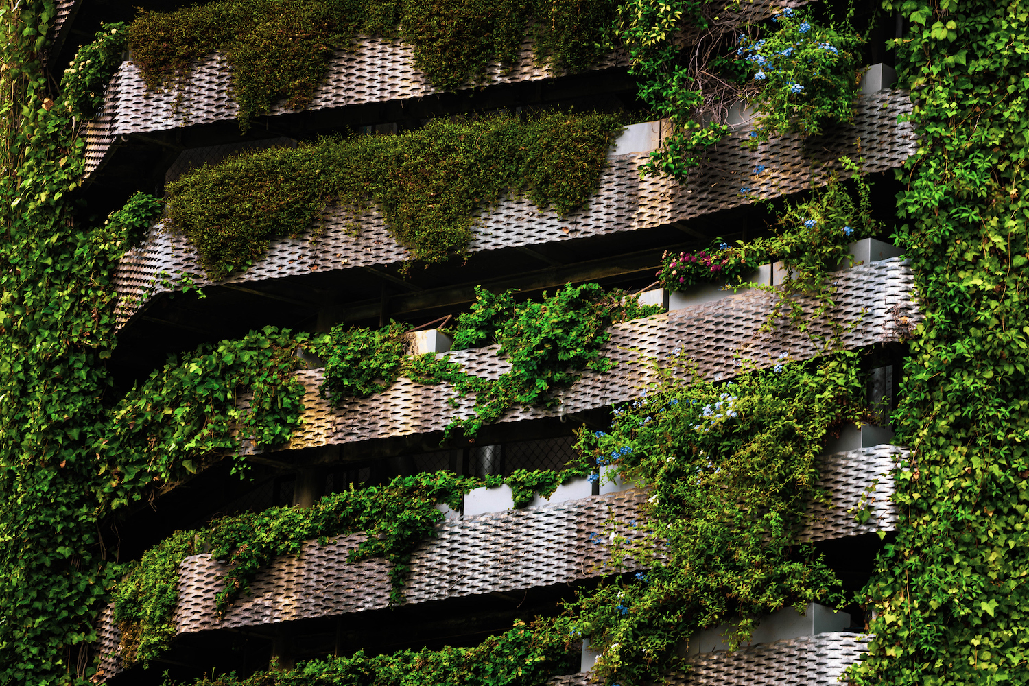 Green building covered with vertical garden in the city.