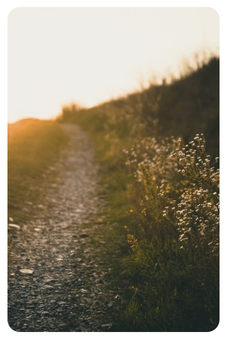 Stig gjennom gresset på en sommerdag - Parweb.