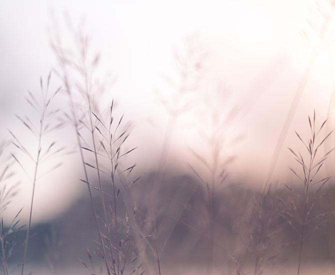 Gress i solnedgang  - Parweb.