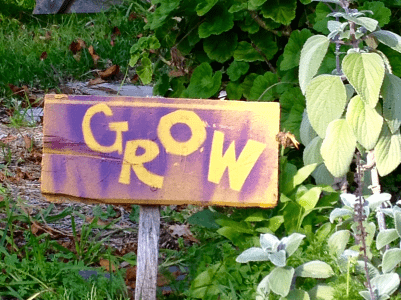 """A photograph of purple sign that says """"grow"""" in yellow letters. The sign is in the middle of a garden full of green plants."""