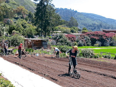 A photograph of people working in the dirt in a large garden. In the background are tree-covered hills.