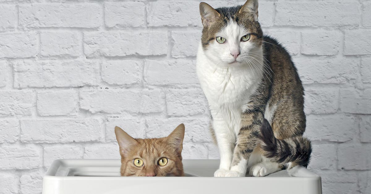 Funny ginger cats looking to the camera