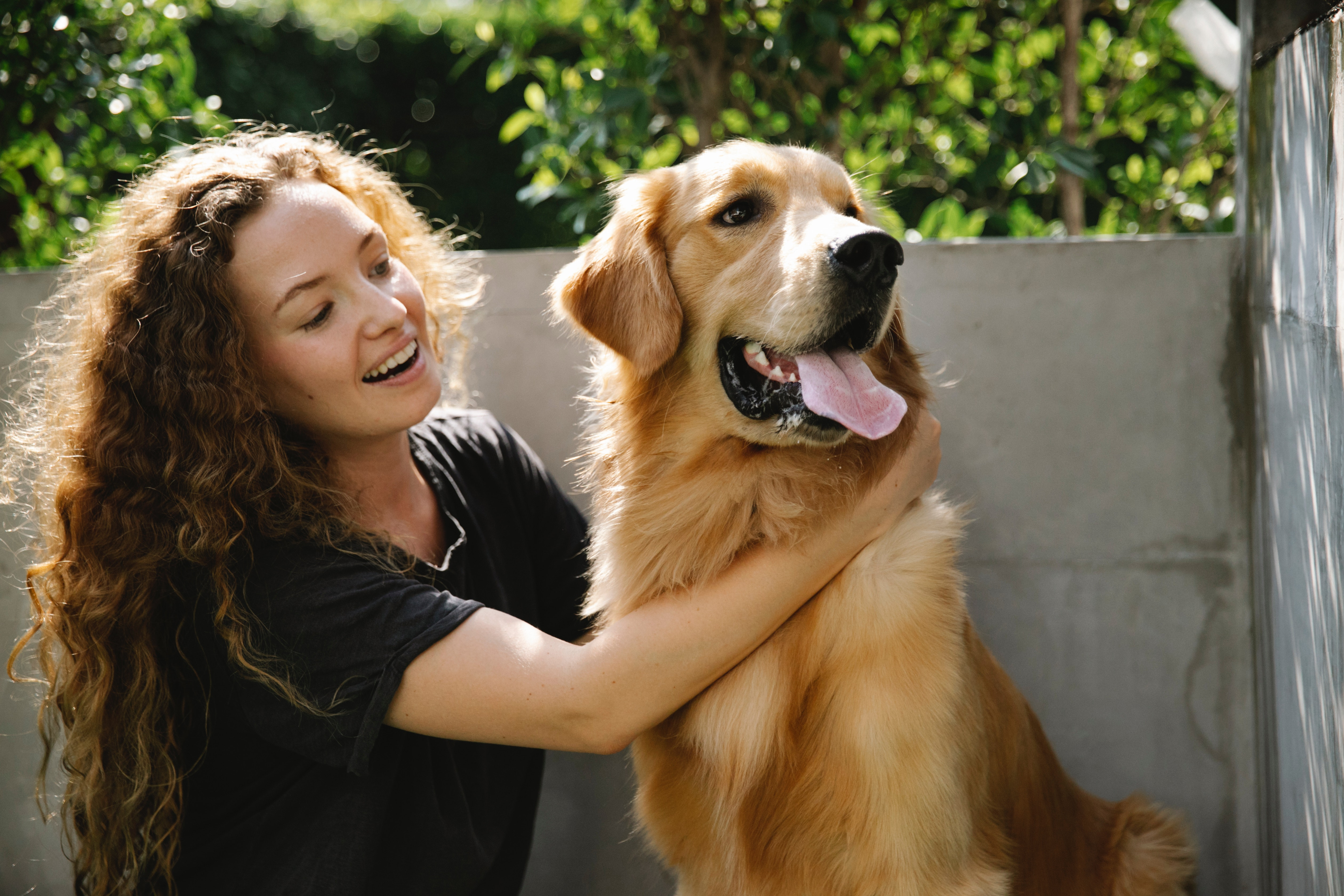 An in-depth guide on house call pet grooming