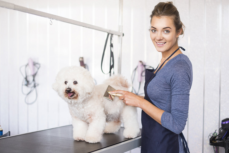 The top things that you need to know about home-based grooming services