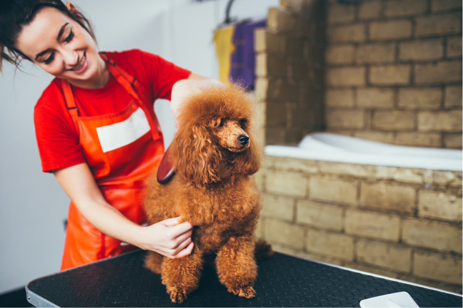 Where can I find a list of local dog groomers?