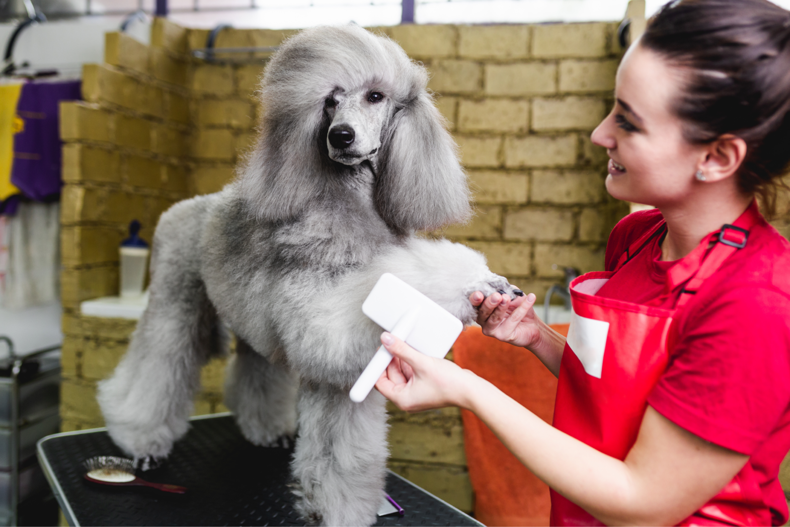 The top questions to ask a dog groomer during grooming sessions