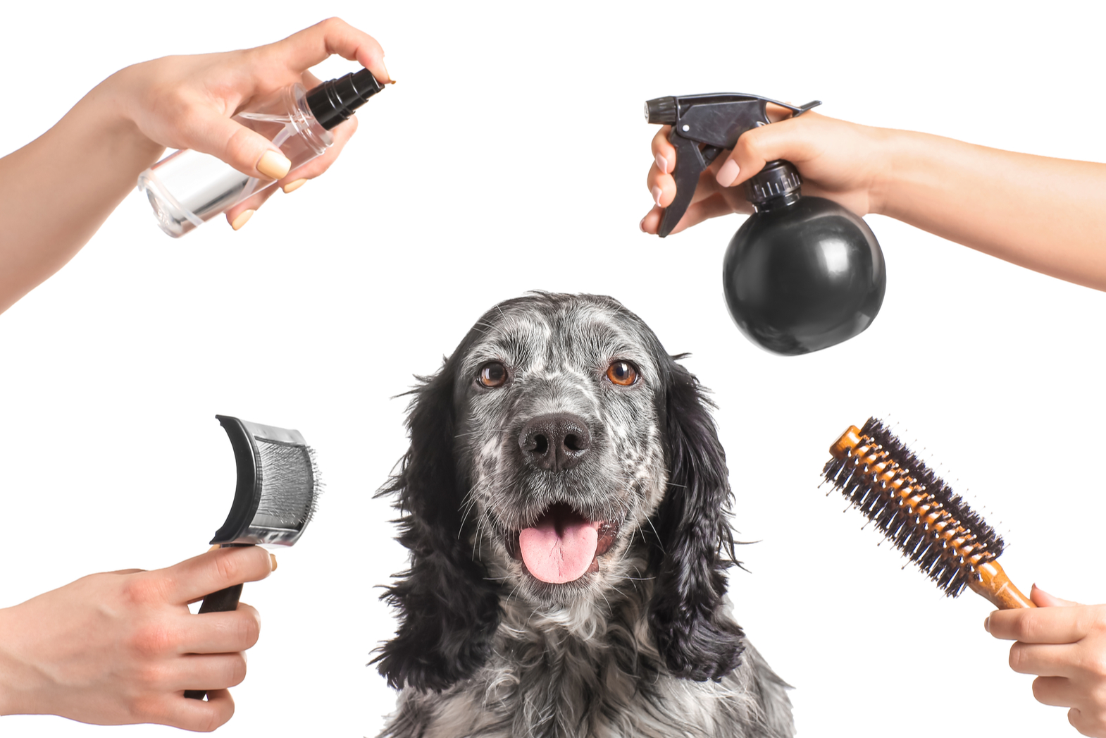 What do you need to provide when hiring a mobile dog groomer?