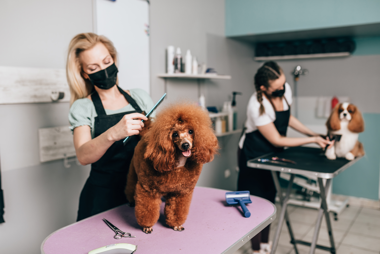 DIY dog grooming versus hiring a dog groomer