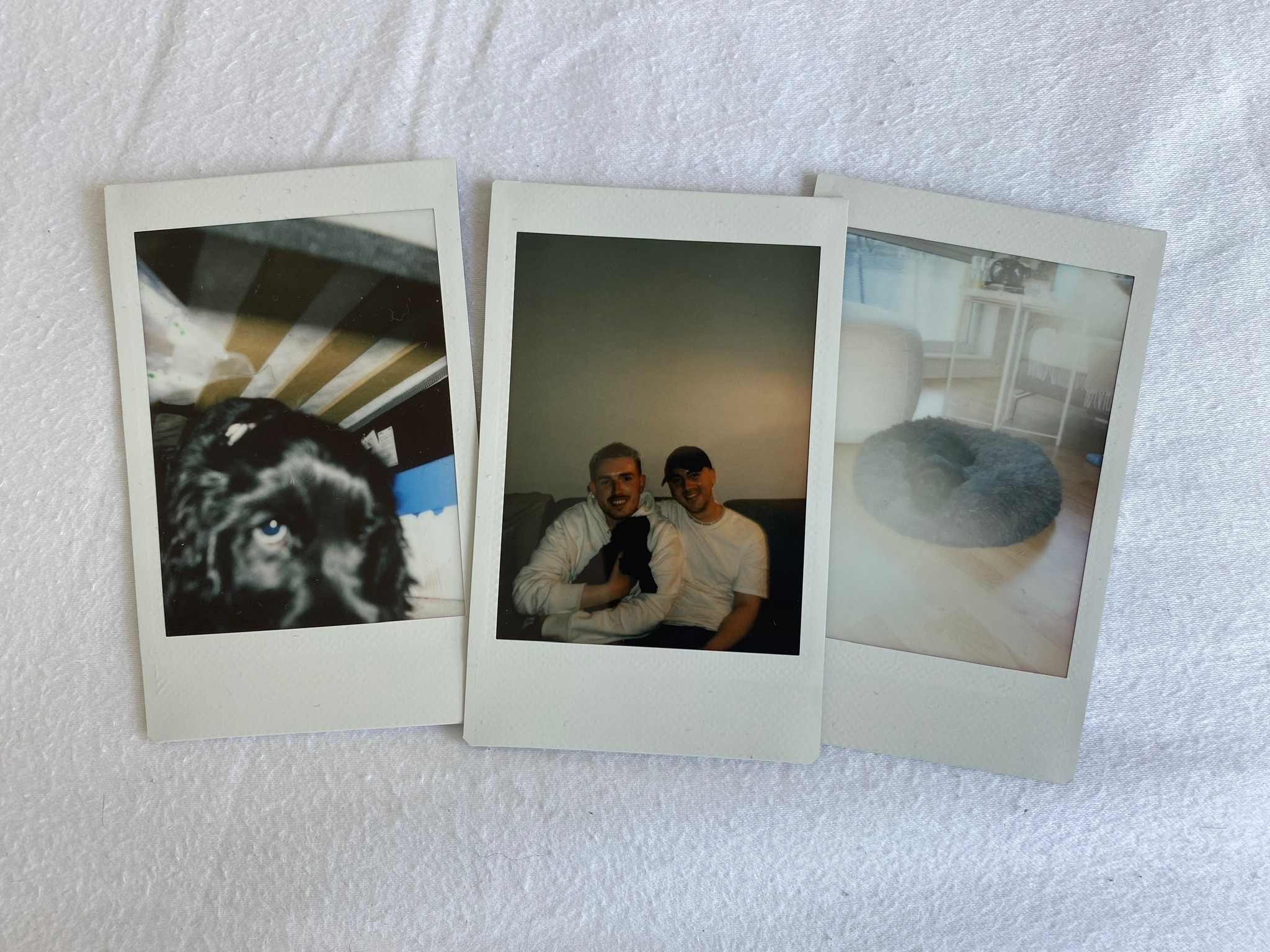An image of three polaroid photographs. One showing Olive, a black Cocker Spaniel puppy, one with Olive, Fraser and his partner and one with Olive on a dog bed.