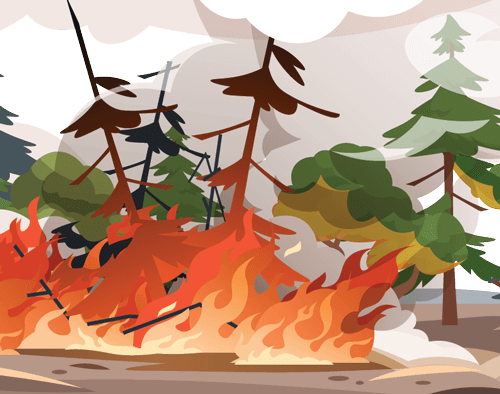A wildfire consuming trees