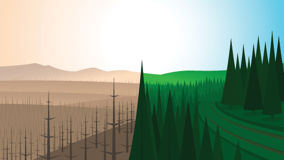 A burnt forest compared to a healthy forest