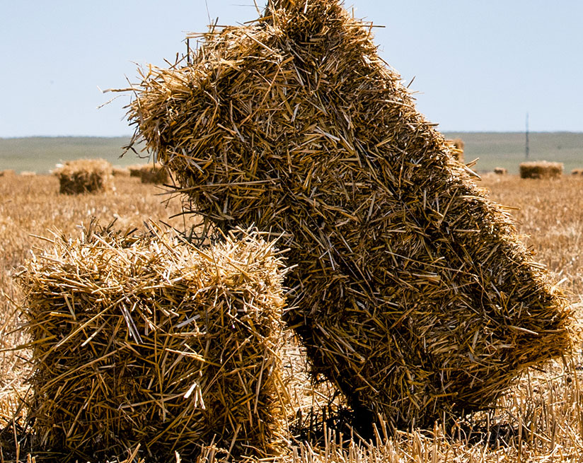 Forged Hay