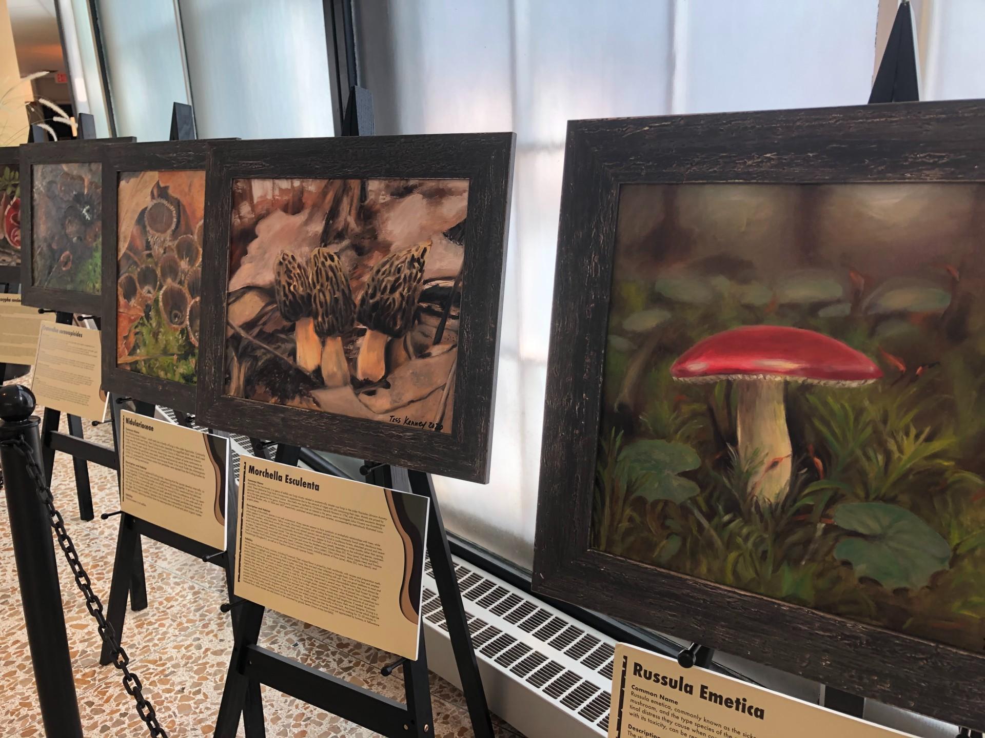 pop-up mushroom art gallery
