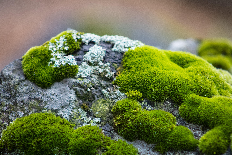 Meet the Marvelous World of Mosses