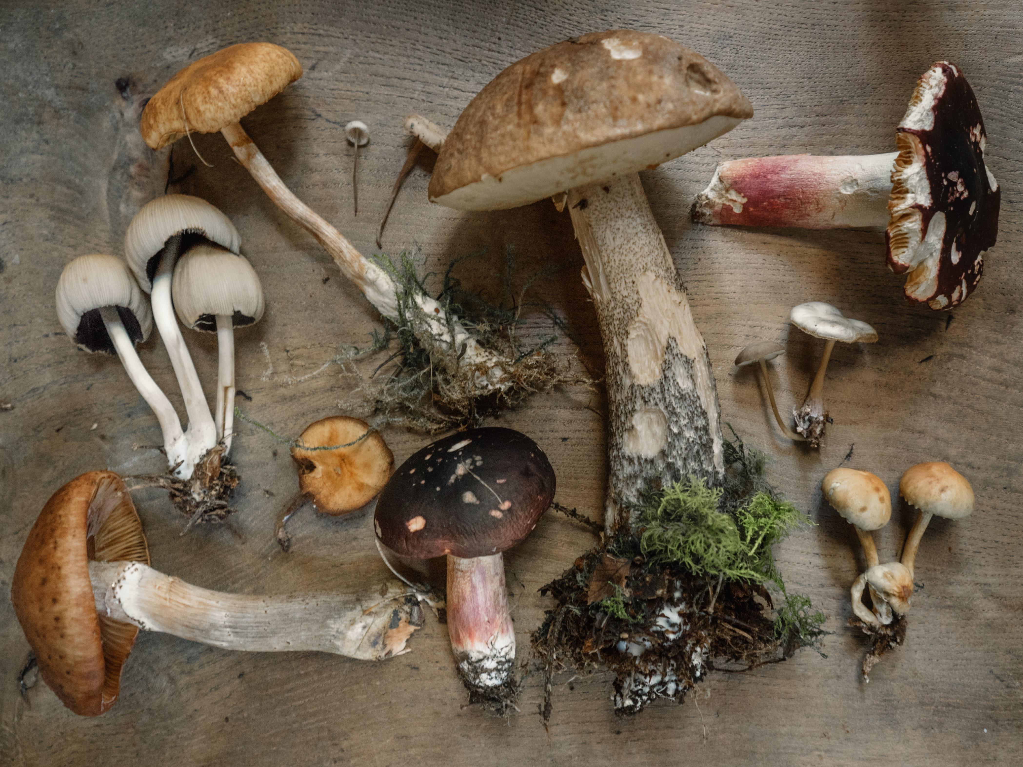 Meet fungi experts: Sunday, Sept 26