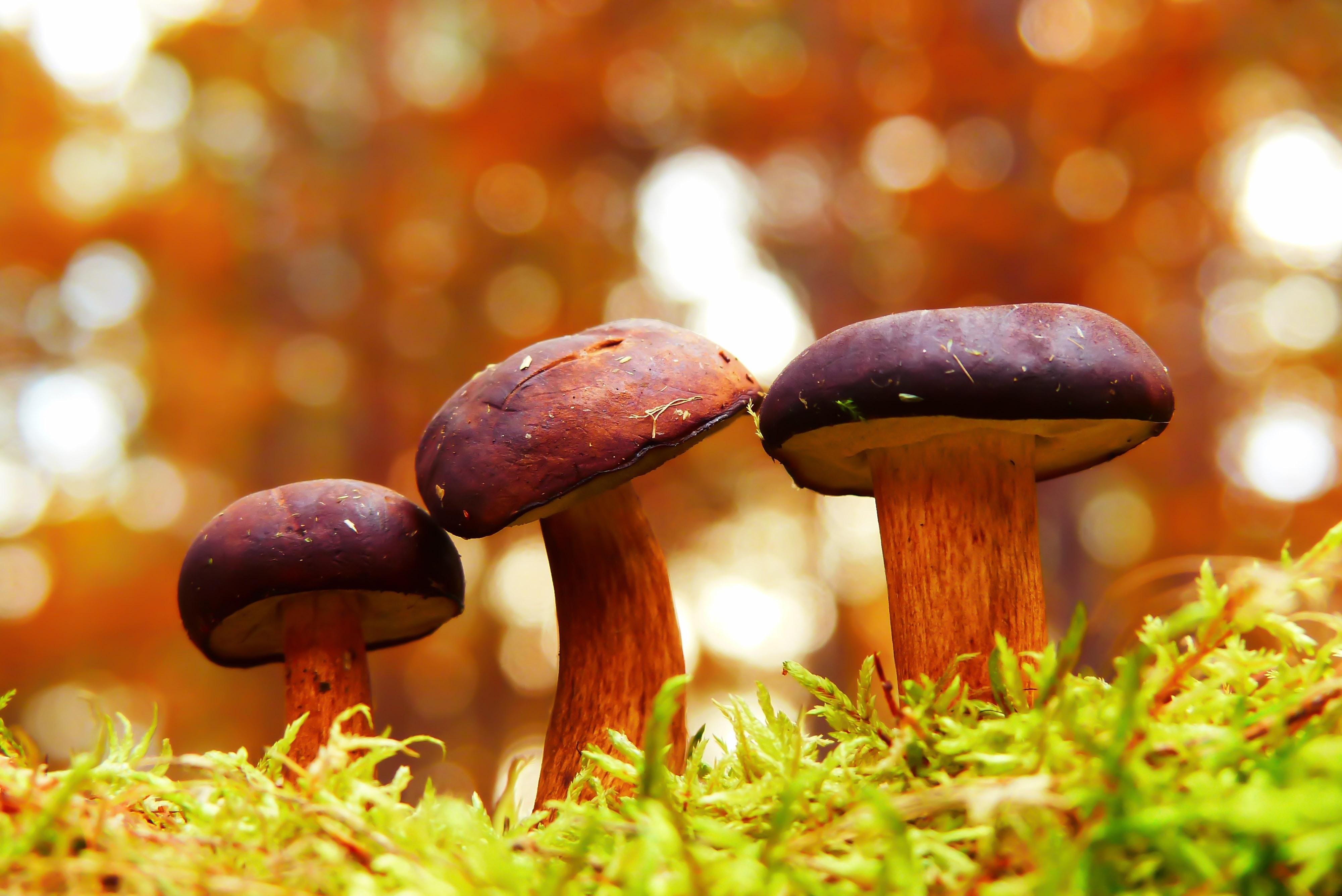 Mushroom or Beer?