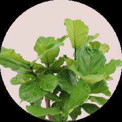 Plantenadvies en ontzorging op maat logo