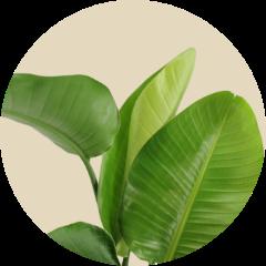 afbeelding - Groen planten van hoge kwaliteit vers van de kweker
