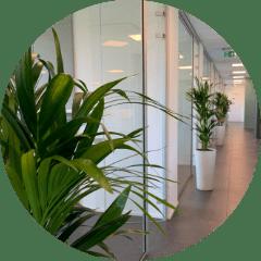 Groen in jouw zaak - afbeelding - planten kantoor