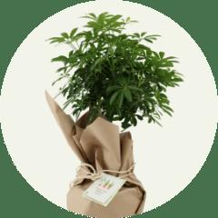 groene relatiegeschenken - plant ingepakt