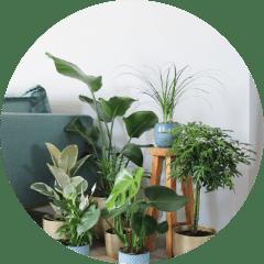 Webshop-afbeelding-planten