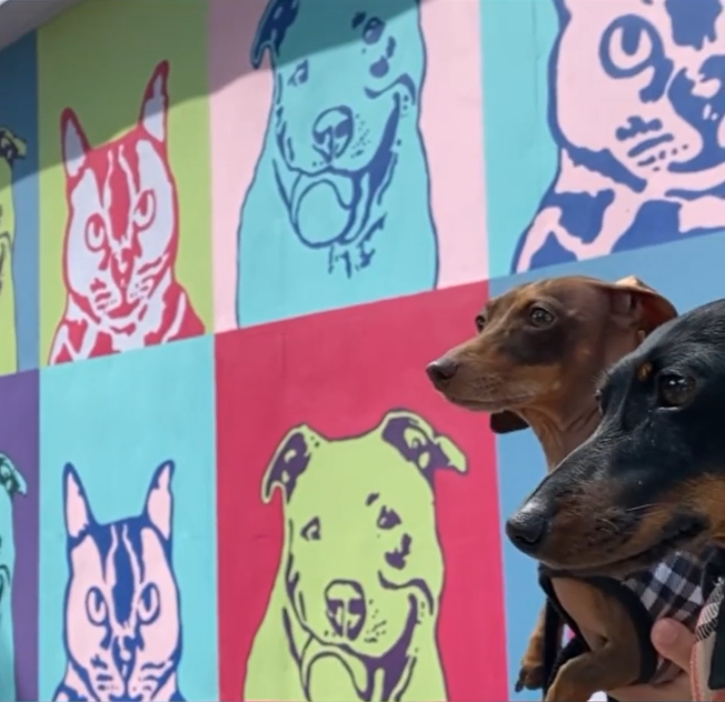 Moonpie Starbox celebrity dogs posing in front of colourful pop art wall with cat and dog images