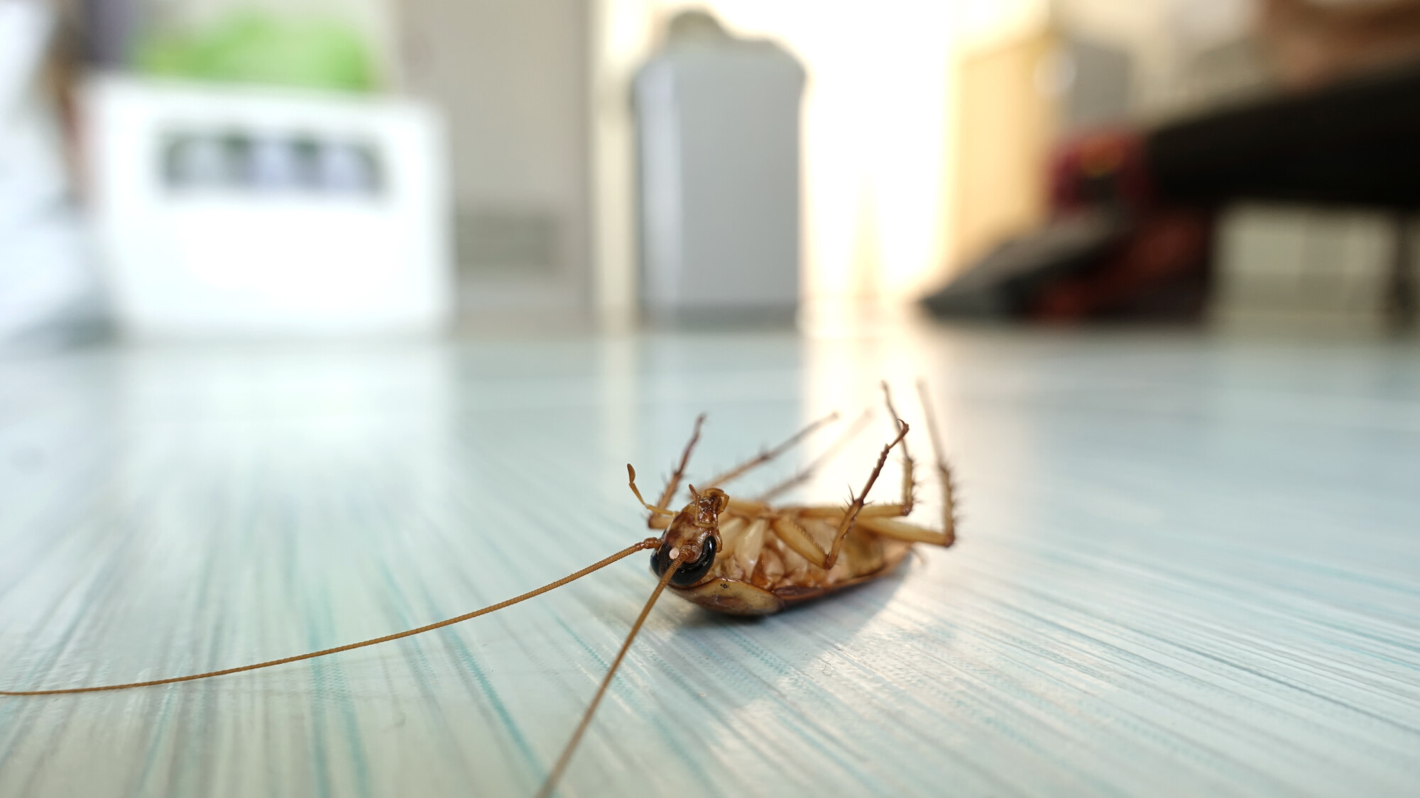 Do It Yourself Pest Control Products Online
