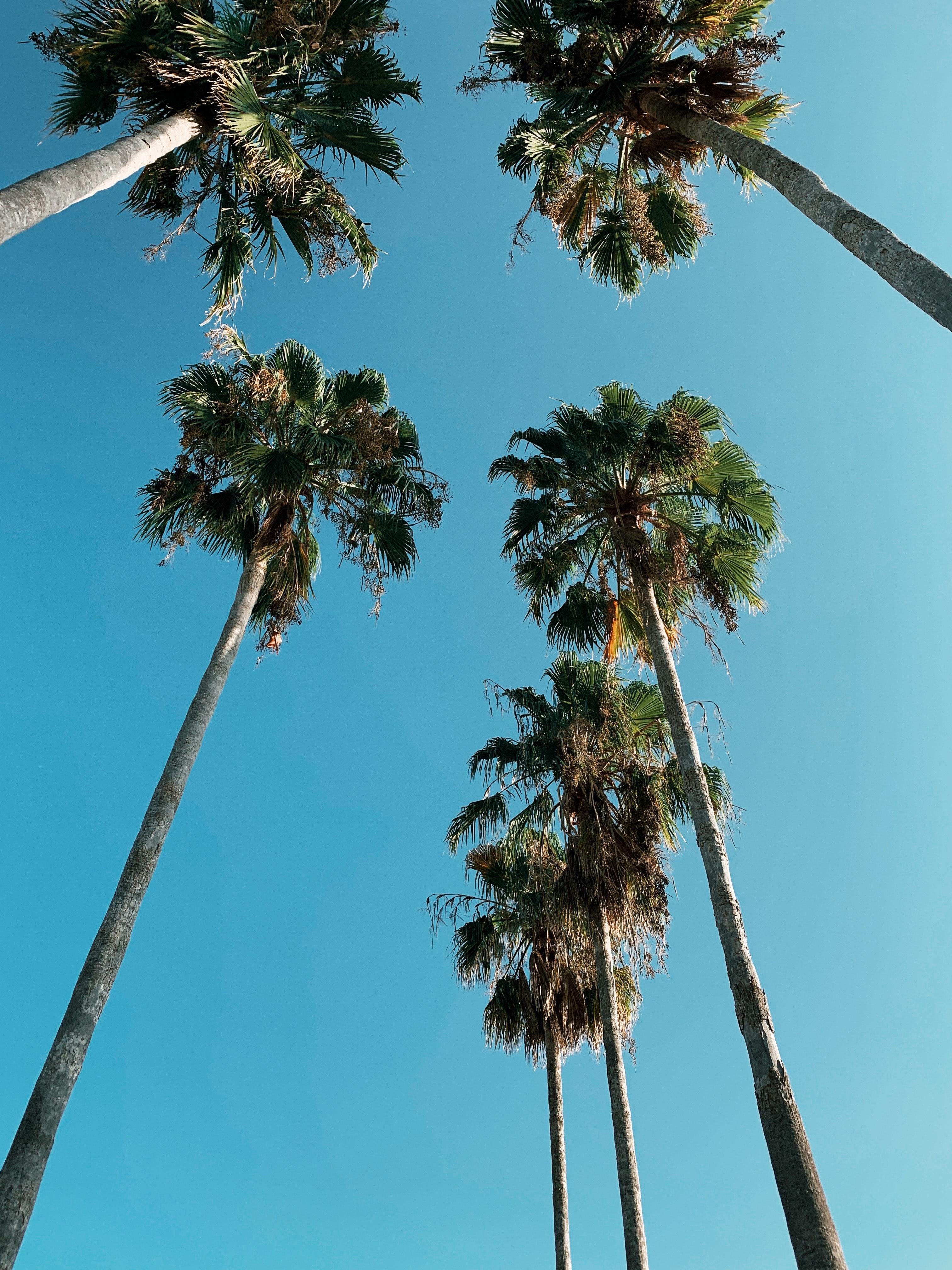 beneath palm trees