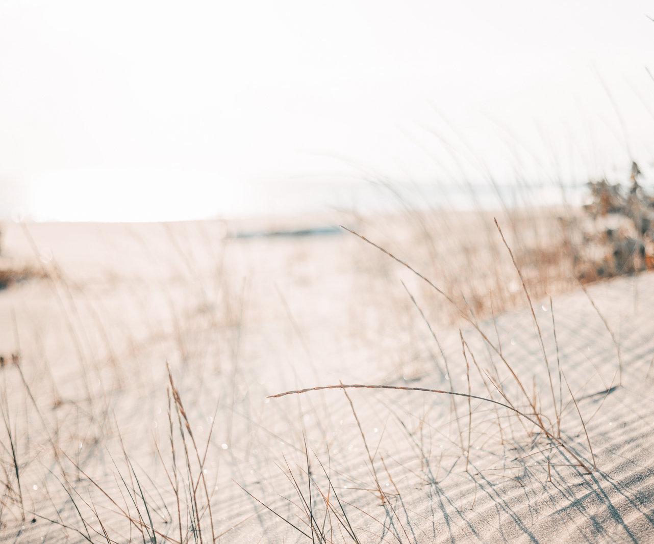 Dünen und Gräser, das Meer im Hintergrund.