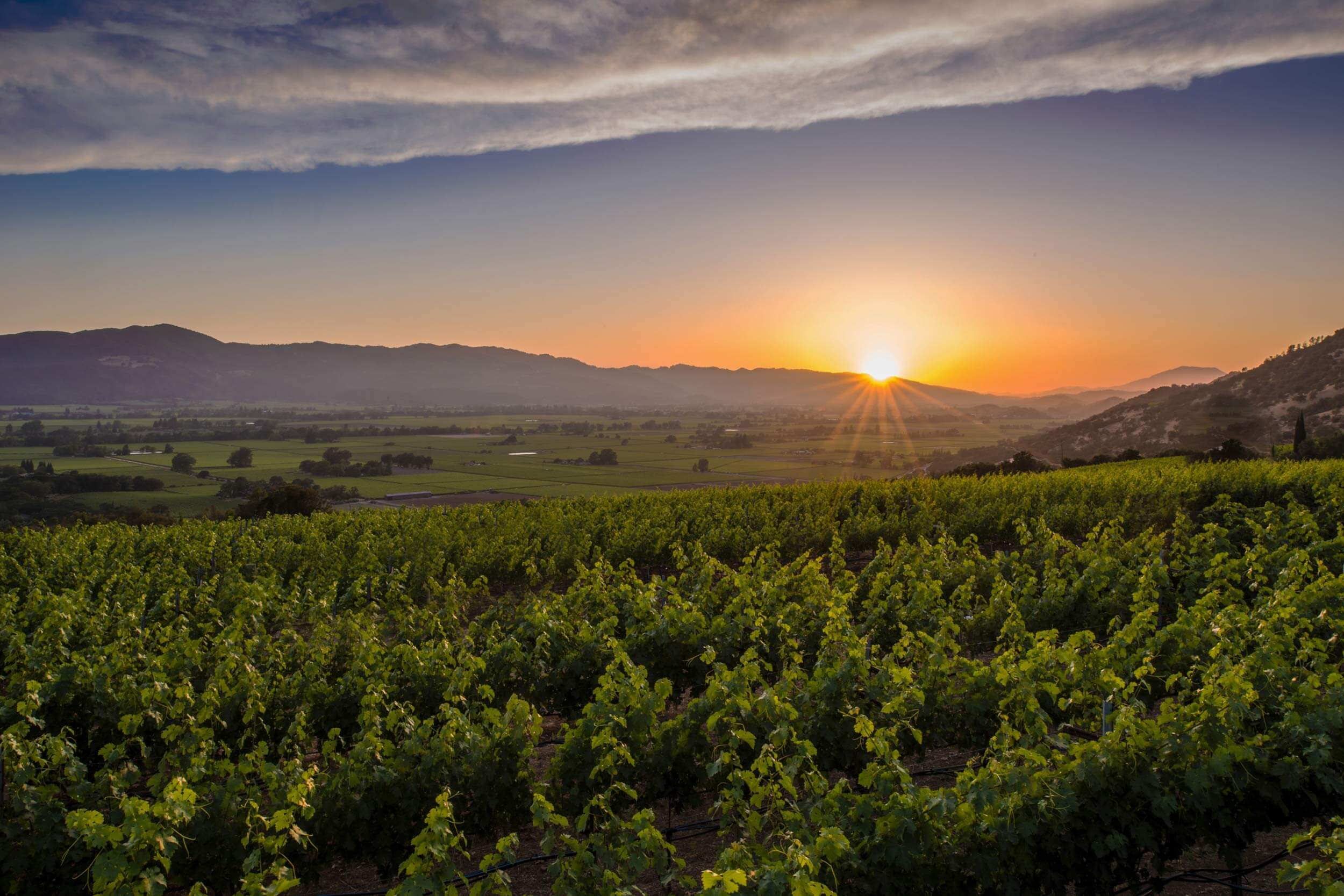 Sunset over the our Napa Valley estate vineyard with a view of the surrounding valley and mountains